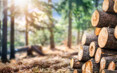 Le bois est reconnu par les Français comme le matériau le plus écologique